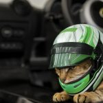 ロータス、BMWが相次ぎペットグッズ発表。ロータスからはわずか25グラムの「猫用ヘルメット」