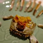 上海に行ったなら上海蟹!「成隆行蟹王府」にてとことん上海蟹を食べ尽くしてきた