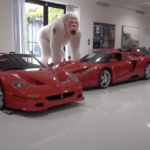 フェラーリ、ポルシェ、ランボルギーニ等スーパーカーコレクション